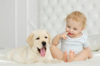 Baby and Pets